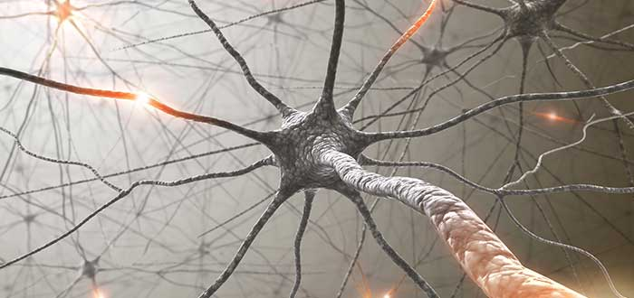 conexiones-cerebrales