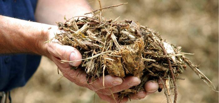 Características de la energía de biomasa