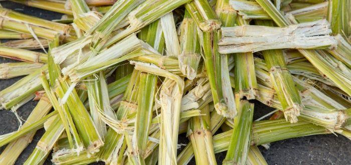 Para qué sirve la energía de biomasa