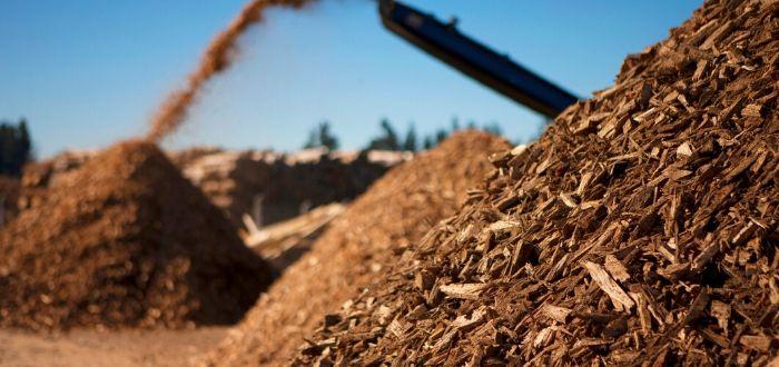 Qué se puede esperar de la energía de biomasa