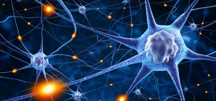 Red de neuronas o neural networking