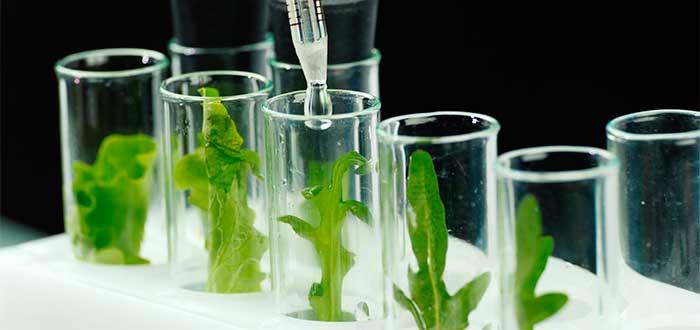 Ingeniería genética Argumentos