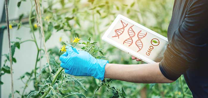 Ingeniería genética aplicaciones