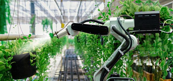 Aplicaciones de la Inteligencia Artificial agricultura 2