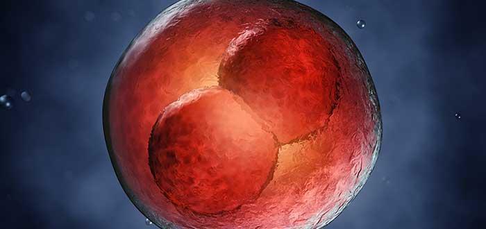 1-Embrión-1