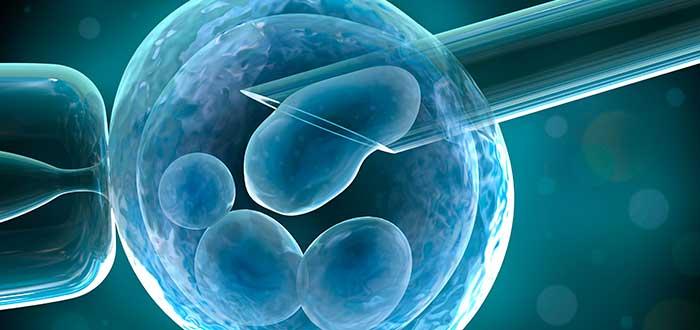 1-Embrión-2