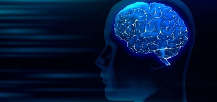 Cerebro humano   Copiar y pegar el cerebro humano en microchips